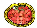 National Research Centre for Litchi, Muzaffarpur logo